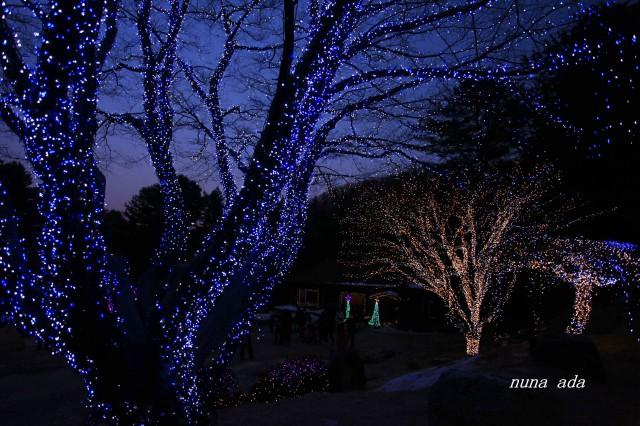 树木艺术灯图片大全