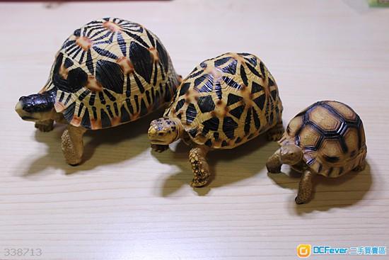 象龟玩具照片