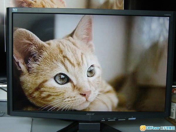 壁纸 创维 电视 电视机 动物 猫 猫咪 小猫 桌面 600_450