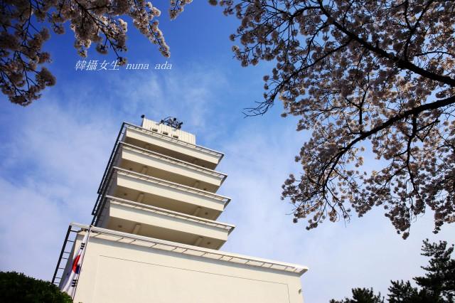 韓國櫻花誌(二):鎮海余佐川的日與夜